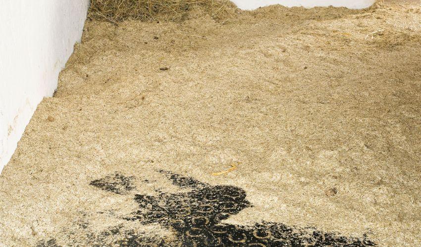 BELMONDO Trend Komfortmatte aus Gummi in der Box / Liegefläche im Pferdestall