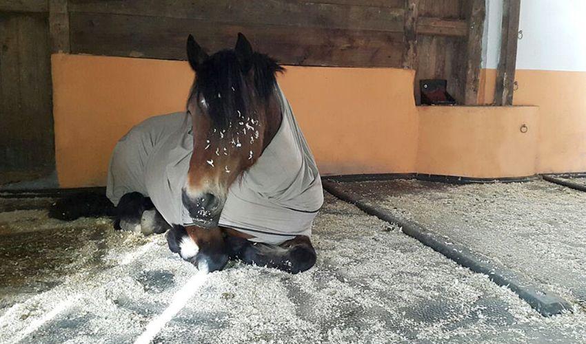 BELMONDO Kingsize Duo komfortables Pferde-Stallmatten-System in der Liegefläche/Gruppenhaltung