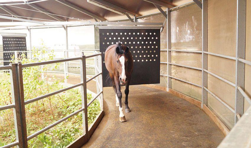 maßgeschneiderte und trittsichere BELMONDO Horsewalker Gummimatte in der Pferde-Führanlage der Firma Kraft Führanlagen