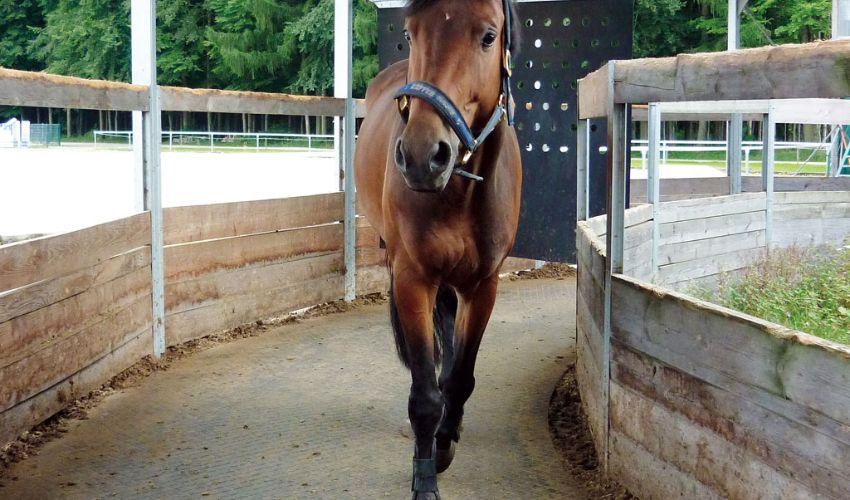 BELMONDO Horsewalker trittsicheres und maßgeschneidertes Gummibodensystem in der Pferde-Führanlage