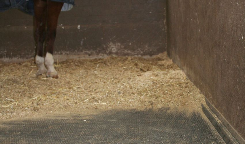 BELMONDO Kingsize Pferdematten-System in der Aufwach- / Narkosebox in der Tierklinik