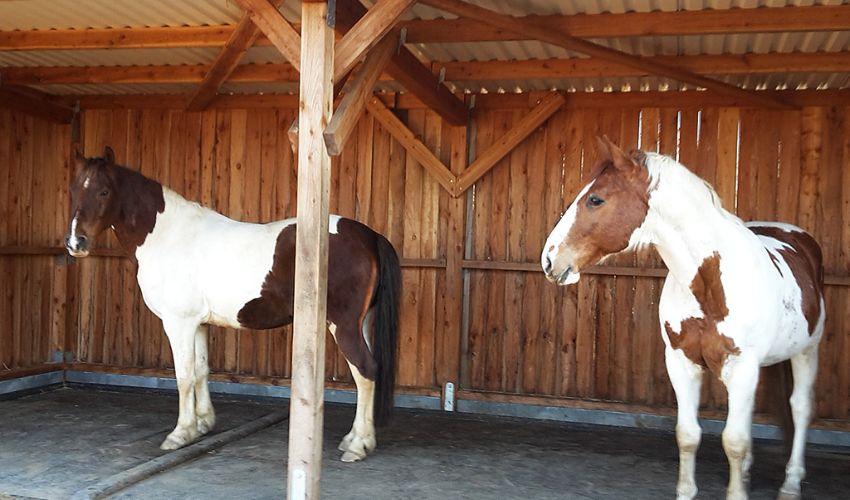 BELMONDO Kingsize Duo Pferdematten-System für Liegeflächen in der Gruppenhaltung
