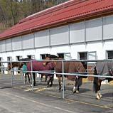 Neu eröffneter Trainingsstall in Lubljana mit BELMONDO