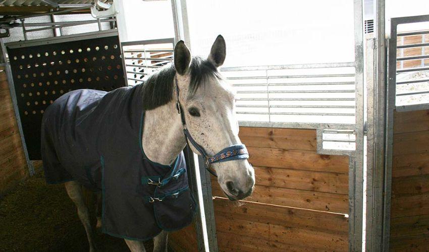 BELMONDO Motion trittsicherer und für jede Anlage individuell maßgefertigter Gummibodenbelag im Pferde-Führring