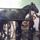 BELMONDO Gummibeläge in der Pferdeklinik der Thrakischen Universität Stara Zagora, Bulgarien