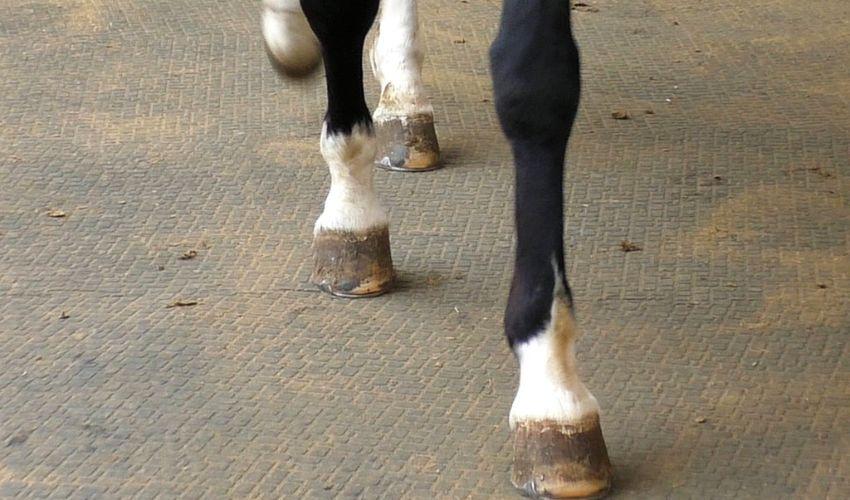 BELMONDO Motion Pferdematte aus Gummi in der Führanlage