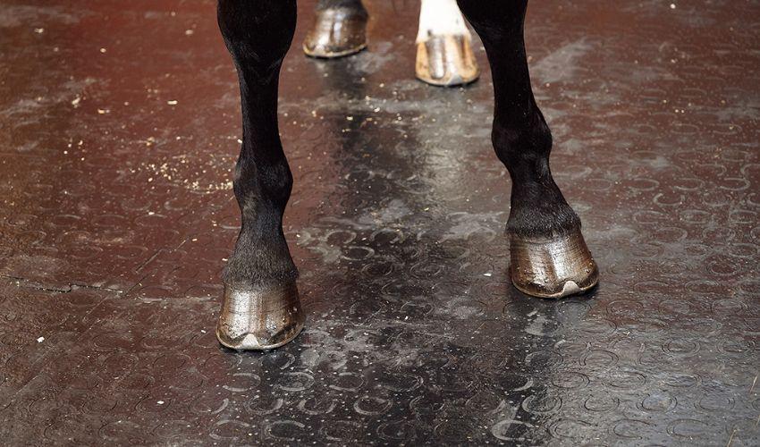 BELMONDO Classic Pferdestallmatte aus Gummi in der Pferde-Box