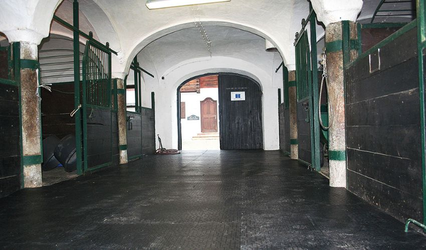 good looking and slip ressitant walkway in a horse stable with BELMONDO Walkpro rubber flooring system