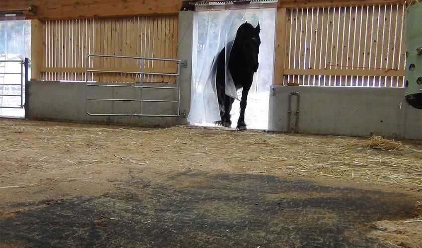 lying area in horse stable with BELMONDO Trend comfortable rubber mat
