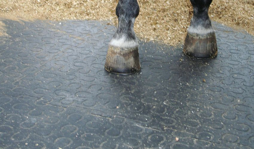 loosebox with BELMONDO Trend soft horse stable flooring made of rubber