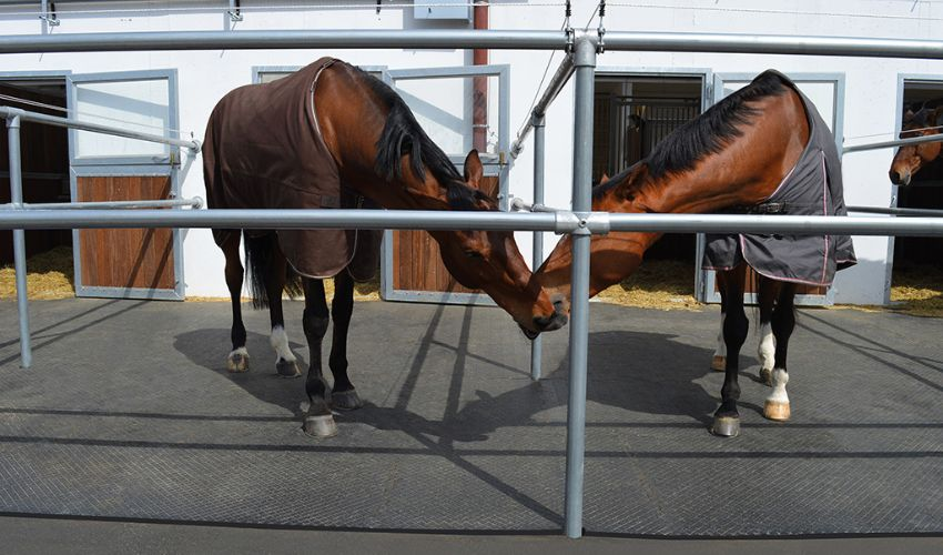 single paddock with BELMONDO Paddock sure footed horse stable mat made of rubber
