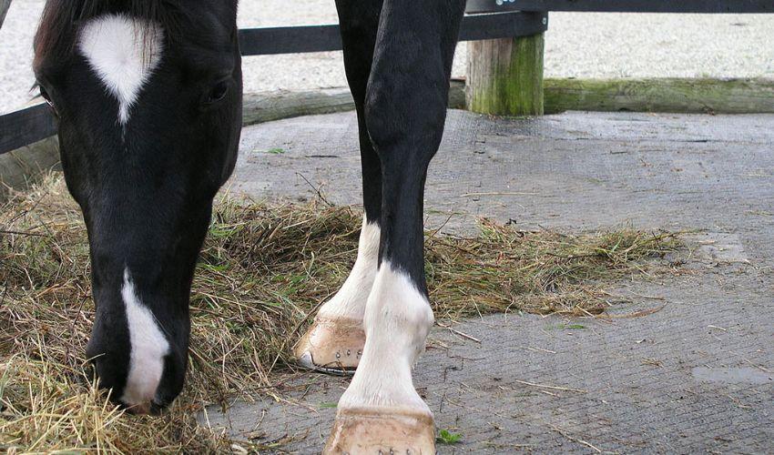 BELMONDO Paddock trittsichere Paddockmatte aus Gummi im Boxenpaddock im Pferdestall